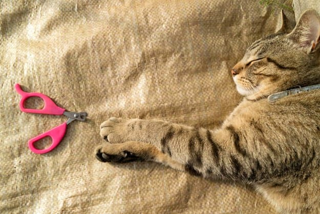 Nail Clippers | Essential Cat Grooming Tools