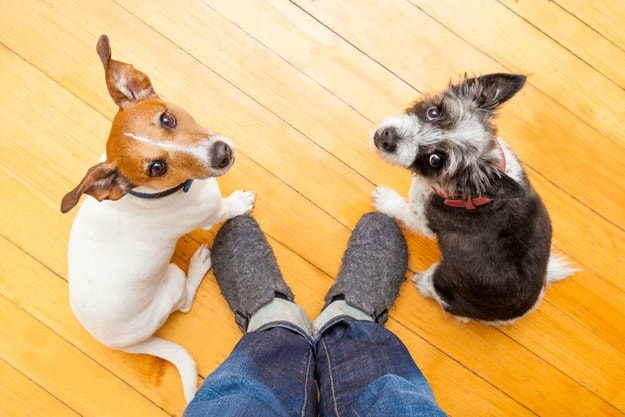 Stay / Sit | New Tricks to Teach Your Dog This Year