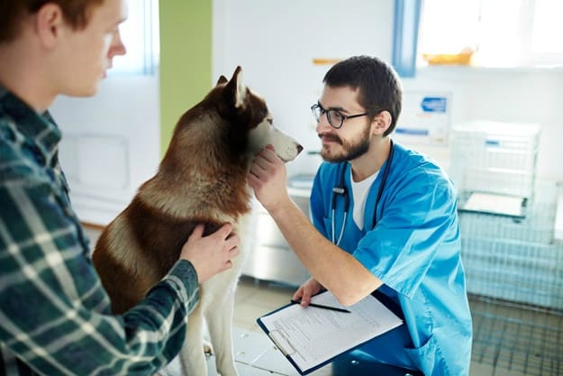 How Often Should I Bring My Puppy to the Vet? | Dog Health Questions for New Pet Owners