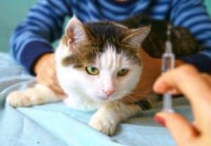 veterinarian-hand-syringe-cat-close-up-Flea Medicine for Cats-dt