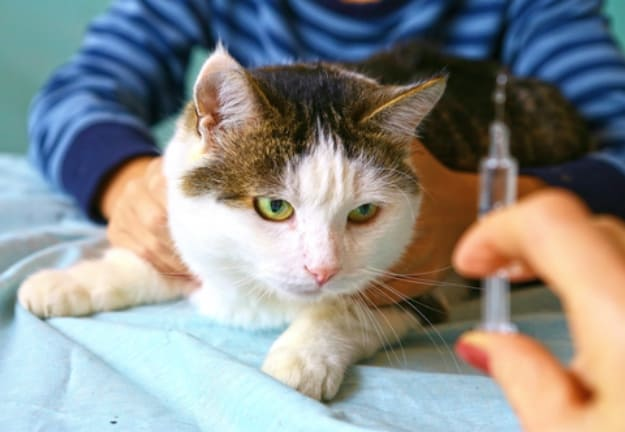 What is Flea Medicine? | Is Flea Medicine for Cats Safe or Not?