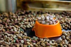 wet-canned-pet-food-bowl-surrounded-dog health questions-ss
