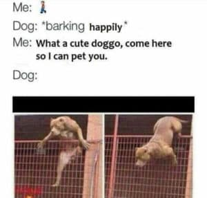 what a cute doggo-dog memes to cheer you up-