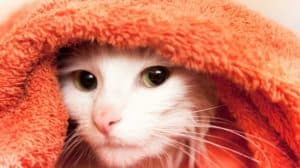 Don?t Miss These Posts On Pet Care And Wellness...