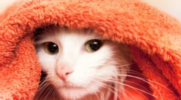 How to Groom a Cat | A Basic Guide for the First-Time Cat Owner