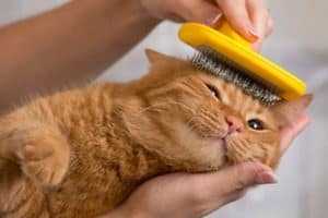 woman-combing-her-redhead-cat-how to groom a cat-ss