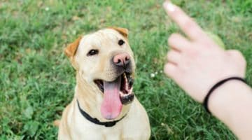 9 New Tricks to Teach Your Dog This Year
