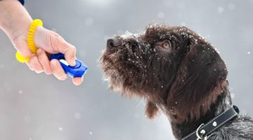 Clicker Training for Dogs: 7 Basic Questions You Need to Ask