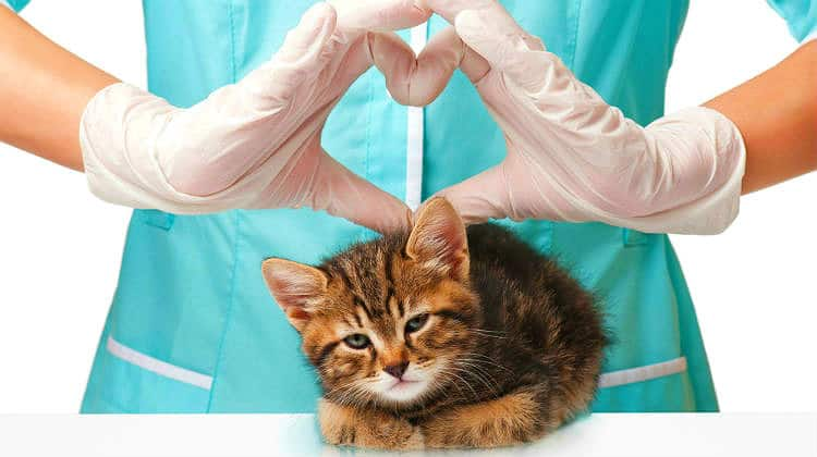 Vaccinations for Cats: Core Vaccines, Schedules, and Possible Risks