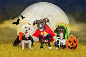 Halloween | Pet Safety Tips for Holiday Hazards