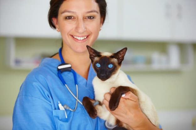 Risks Associated with Vaccines | Vaccinations for Cats: Core Vaccines, Schedules, and Possible Risks
