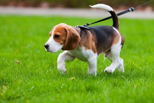 Use Rewards | How to Potty Train a Dog Fast