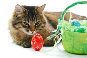 Easter | Pet Safety Tips for Holiday Hazards