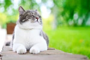 cute-cat-enjoying-himself-outdoors-cat health issues ss