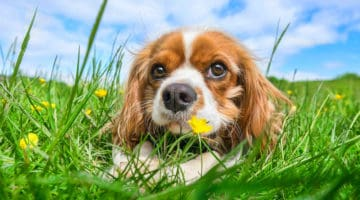 How to Potty Train a Dog Fast
