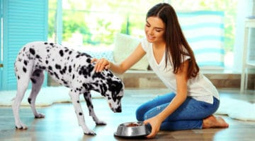 6 Healthy Dog Diet Tips to Boost Their Well-Being