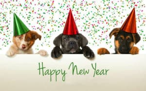 New Year's Day | Pet Safety Tips for Holiday Hazards