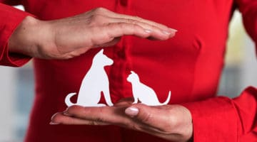 Pet Safety Tips for Holiday Hazards