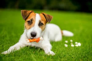 Limit Treats   6 Healthy Dog Diet Tips to Boost Their Well-Being