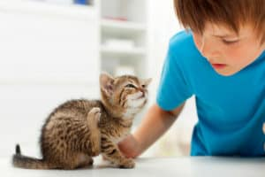 Fleas | 6 Top Cat Health Issues You Need to Address Immediately
