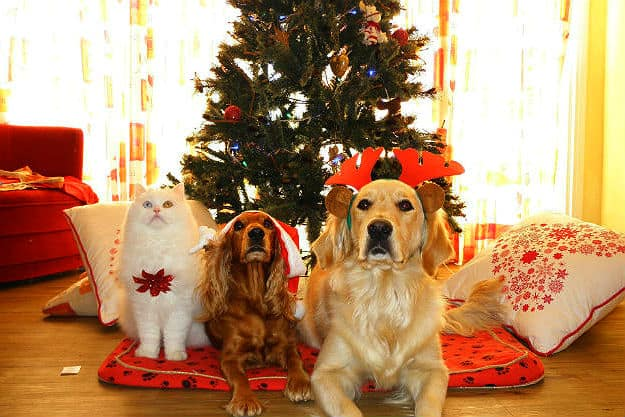 Christmas | Pet Safety Tips for Holiday Hazards