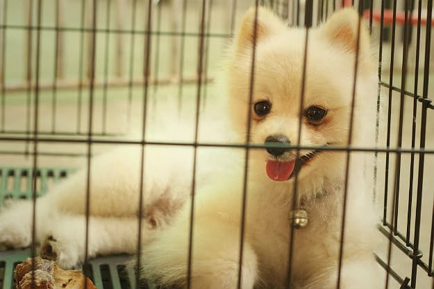 Crate Training   How to Potty Train a Dog Fast