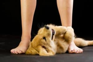 submissive-puppy-dog behaviors and what they mean-ss
