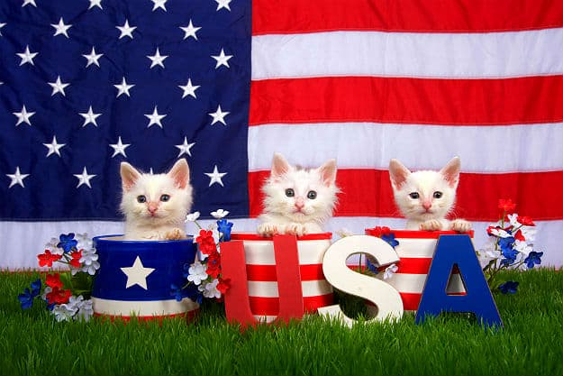 Fourth of July | Pet Safety Tips for Holiday Hazards