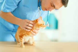 Infections | 6 Top Cat Health Issues You Need to Address Immediately