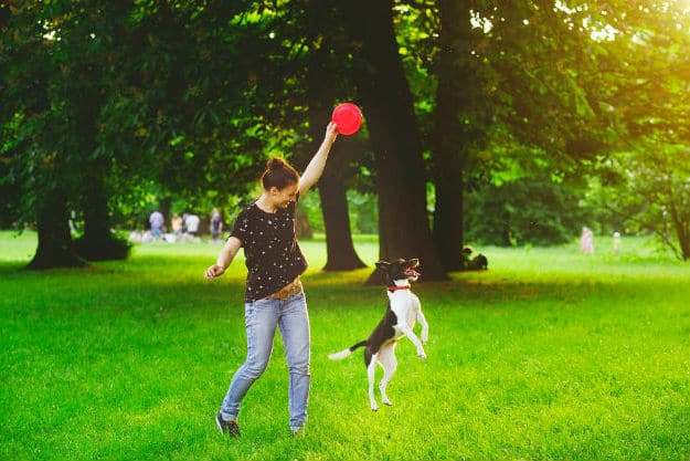 Get Active | 6 Healthy Dog Diet Tips to Boost Their Well-Being