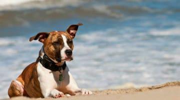 Is Dog Shock Collar Training Cruel or Not?