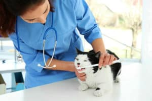 There Is Help Available | How Important Is Cat Dental Cleaning